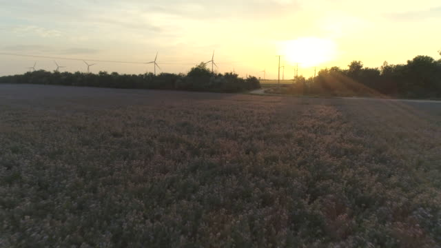 Aerial drone view of wind turbine windmills at sunset.