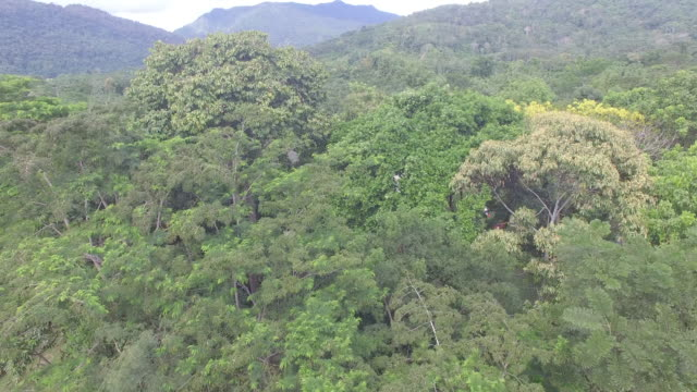 Aerial drone view over rainforest and village