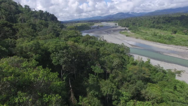 aerial drone view over rainforest - amazon region stock videos & royalty-free footage