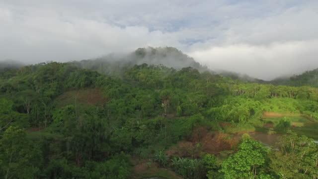 luftbild-drohne blick über den regenwald - brasilien stock-videos und b-roll-filmmaterial