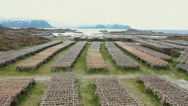 aerial drone view: stockfish industry at lofoten, in norway - drying stock videos & royalty-free footage