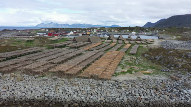 aerial drone view: stockfish industry at lofoten, in norway - pollock fish stock videos & royalty-free footage