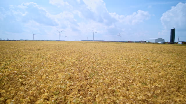 aerial drone view to the wind power plant in the middle of bean fields in ontario, canada. - agricoltura video stock e b–roll