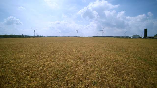 Aerial drone view to the wind power plant in the middle of bean fields in Ontario, Canada.