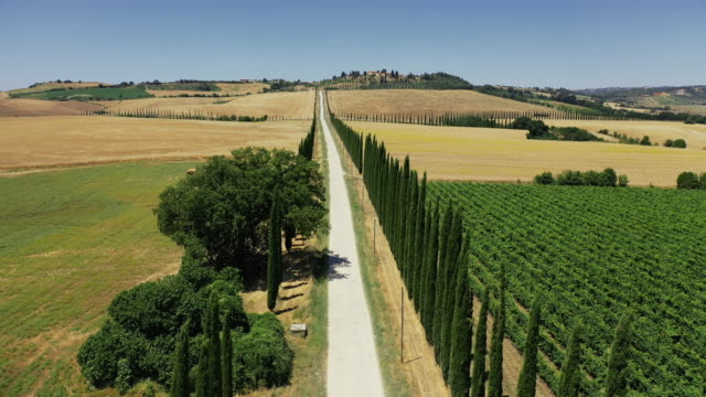aerial drone view: typical cypress trees row in tuscany - collina video stock e b–roll