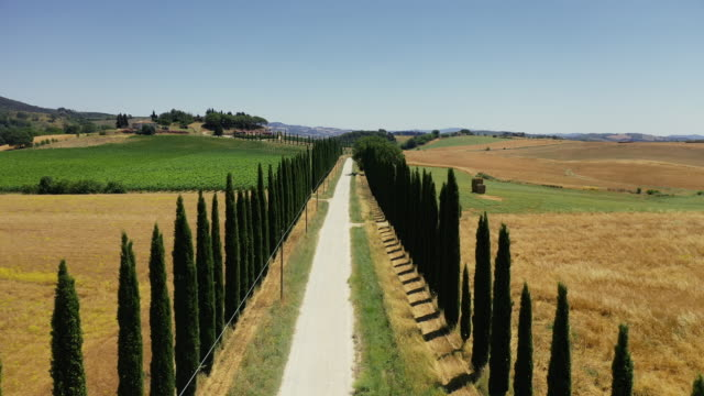 aerial drone view: typical cypress trees row in tuscany - tuscany stock videos & royalty-free footage