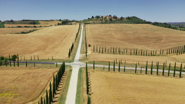 Aerial drone view: typical cypress trees row in Tuscany