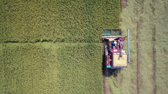 vídeos de stock e filmes b-roll de aerial farmers harvesting by machine - colheita