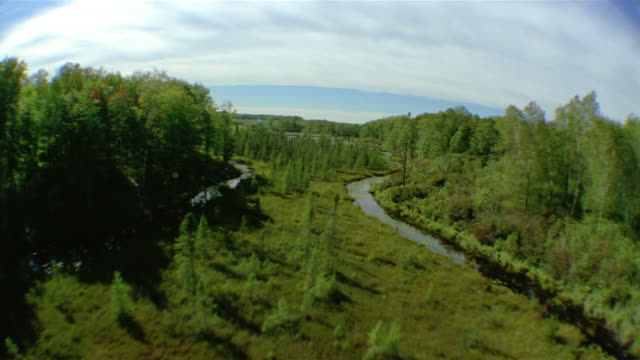 Aerial fisheye over tall grasses, pine trees and algae-covered water in marshland / Minnesota