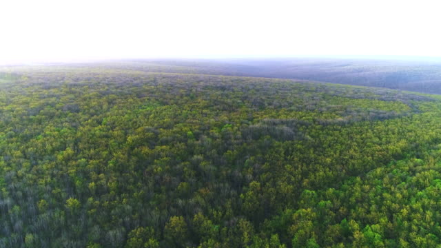 Aerial flight over beautiful panoramic footage over the tops of pine forest