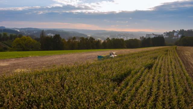 Aerial flight over corn harvest at sunset