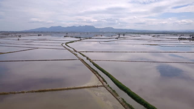 aerial flight over flooded rice fields during irrigation season - irrigation equipment stock videos & royalty-free footage
