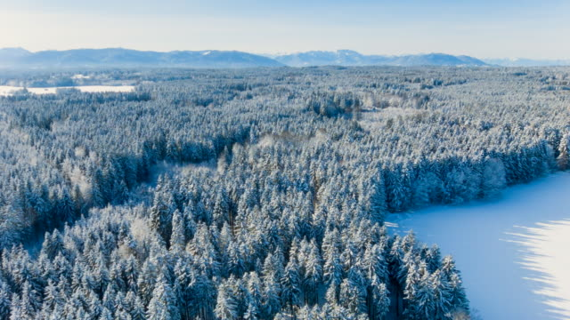Aerial flight over forest covered in snow in winter RL Pan