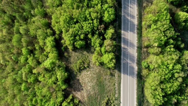 aerial flight over forest with a road - reforestation stock videos and b-roll footage