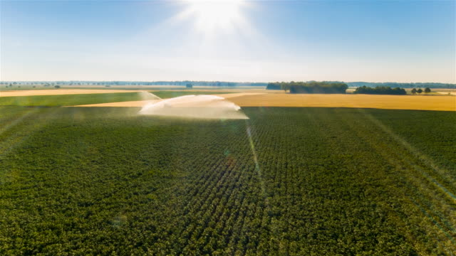 vídeos de stock, filmes e b-roll de aerial flight over water cannon irrigating corn and wheat fields - aspersor
