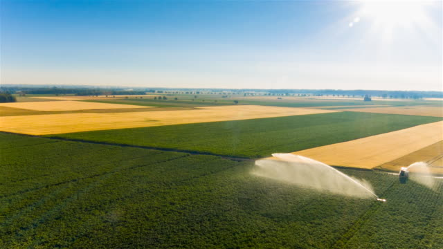 Aerial flight over water cannon irrigating corn and wheat fields