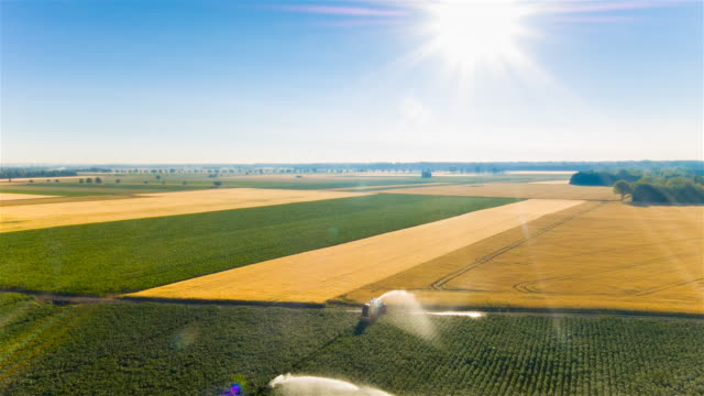 aerial flight over water cannon irrigating corn and wheat fields - bewässerungsanlage stock-videos und b-roll-filmmaterial