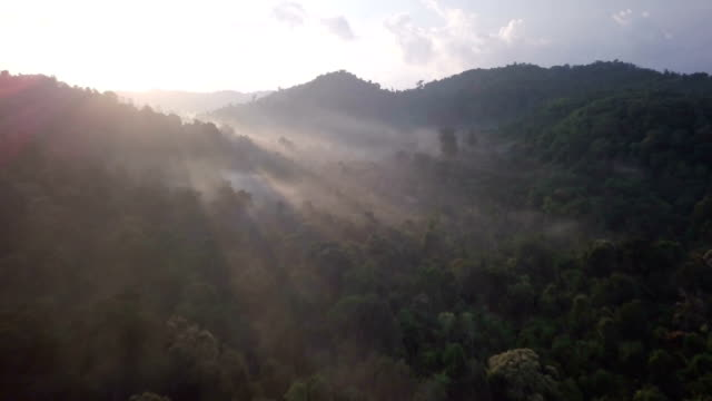 aerial flyover of forest with morning sun rays - indonesia stock videos & royalty-free footage