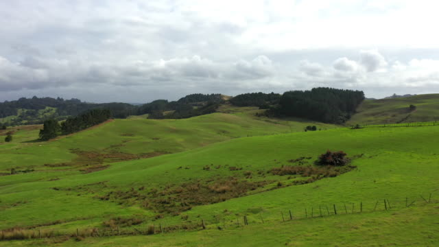 aerial flyover view of fence in remote green rolling landscape / towai, new zealand - hill stock videos & royalty-free footage
