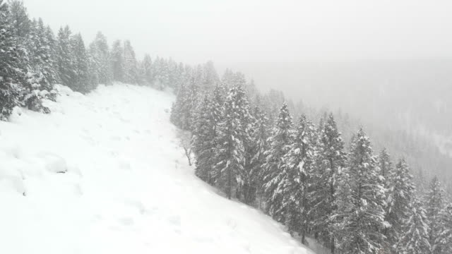 vidéos et rushes de aerial flyover view of snowstorm in forest on mountain / island park, idaho, united states - zoom avant