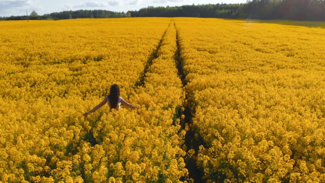 aerial follow: woman in white dress walks in rapeseed field - blossom stock videos & royalty-free footage