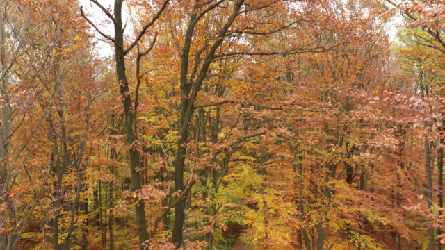 4k aerial footage moving down in colorful autumn wood - nah stock-videos und b-roll-filmmaterial