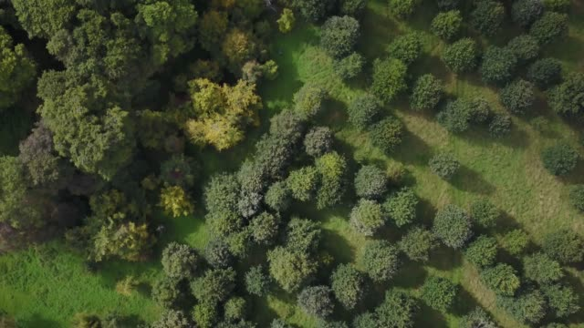aerial footage of a public park in summer, phoenix park, dublin, ireland. - natural parkland stock videos & royalty-free footage