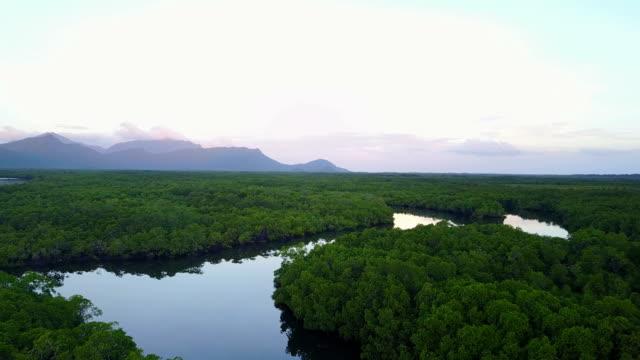 Aerial footage of coastal mangrove swamp in northern Australia prior to cyclone Debbie