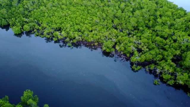 aerial footage of coastal mangrove swamp in northern australia prior to cyclone debbie - mangrove tree stock videos & royalty-free footage