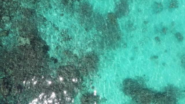 vídeos de stock, filmes e b-roll de metragem aérea do recife coral em maldives, opinião do zangão - azul turquesa