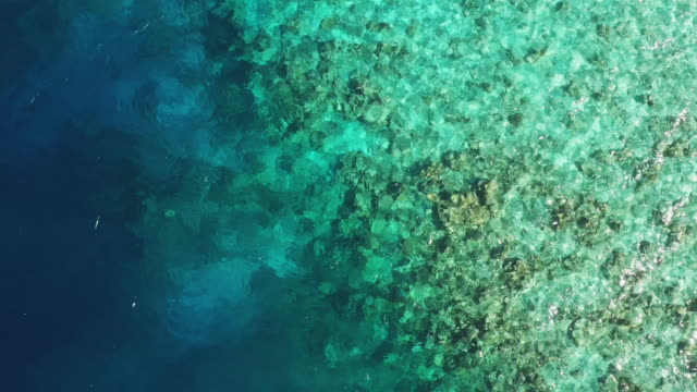 aerial footage of coral reef in maldives - reef stock videos & royalty-free footage