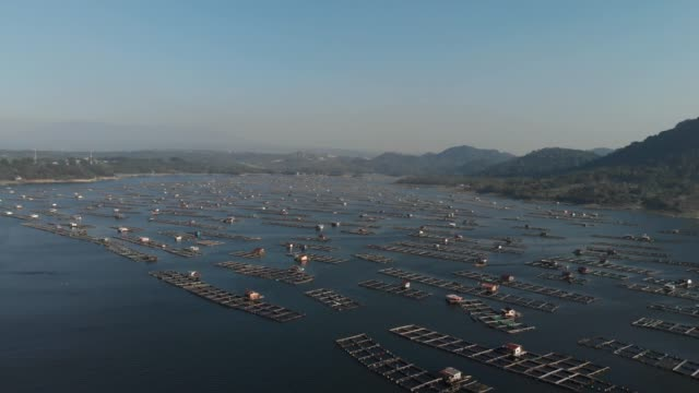 aerial footage of fish cages in jatiluhur reservoir - 2 clips - 1957 stock videos & royalty-free footage