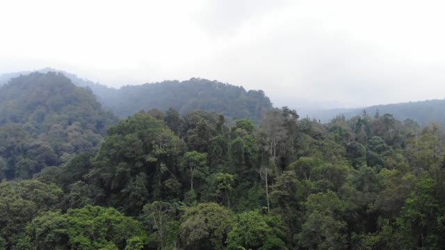 4k aerial footage of rainforest at gede pangrango national park - wildlife conservation stock videos & royalty-free footage