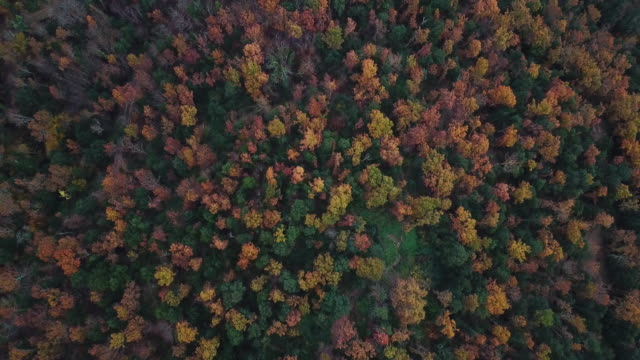 aerial footage of the beautiful forest with autumn colors in the catalan mountains - petal stock videos & royalty-free footage