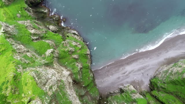 aerial footage of the seabird cliffs of bear island - wildlife stock videos & royalty-free footage