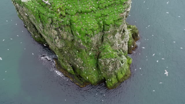 aerial footage of the seabird cliffs of bear island - スヴァールバル諸島点の映像素材/bロール