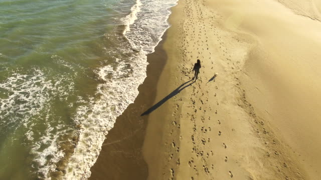 vídeos de stock e filmes b-roll de aerial footage recorded with drone flying over a girl walking in the beach with dog during the sunset light with calm waves in the ebro delta of the catalonia region. 4k uhd. - pegada