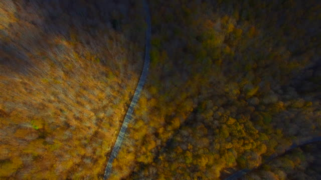 aerial footage recorded with drone flying over mountain road in the stunning forest with autumn colors in the montseny mountain a beautiful huge land covered with trees and high mountains close to barcelona city. - 1978 stock videos & royalty-free footage