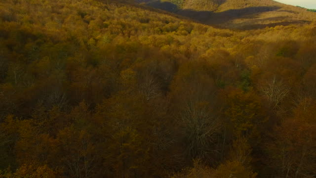 aerial footage recorded with drone flying over the stunning forest with autumn colors in the montseny mountain a beautiful huge land covered with trees and high mountains close to barcelona city. - 1978 stock videos & royalty-free footage