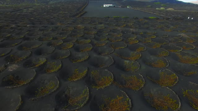 aerial footage recorded with drone flying over the volcanic lanzarote island with stunning volcano landscape and nice pattern holes created for the vineyards in the black land. 4k uhd. - natural pattern stock videos & royalty-free footage