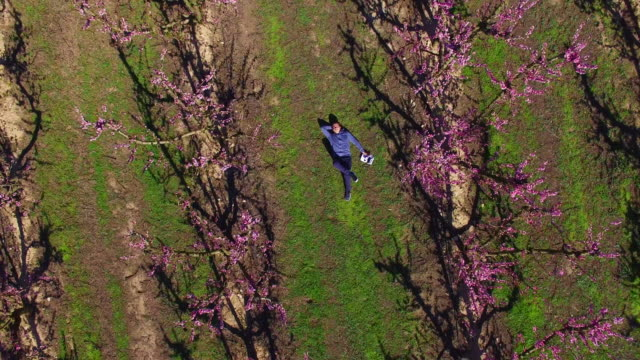 aerial footage recorded with drone of a guy taking a drone selfie laying between the peach trees during blooming season in spring with beautiful pink colors in the catalonia region. 4k uhd. - zoom stock videos and b-roll footage