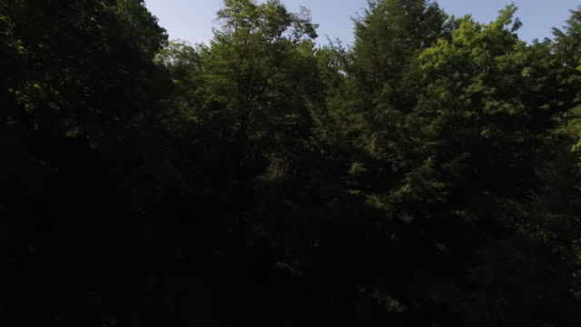 4k aerial footage rising above the trees in the catskills, in upstate new york. 3840 x 2160. sunny day. - appalachia stock videos & royalty-free footage