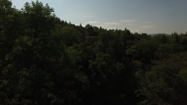 4k aerial footage rising above the trees in the catskills, in upstate new york. 3840 x 2160. sunny day. - appalachian mountains stock videos & royalty-free footage