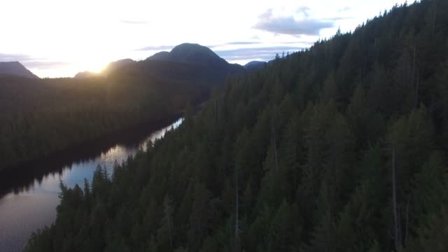 aerial: forest covered hills next to river at sunset - british columbia stock videos & royalty-free footage