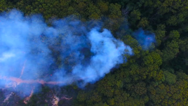 aerial: forest fire smoke floating over lush green forest at macmaster beach, australia - australia stock videos & royalty-free footage
