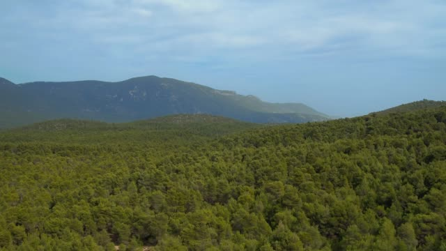 Aerial - forest - forward take of a vast forest with mountains and blue sky