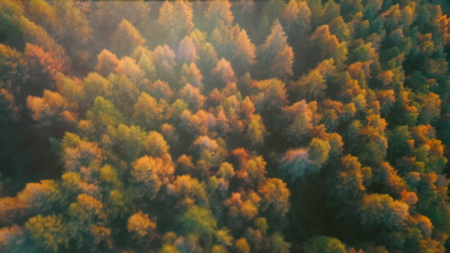 aerial forest in autumn season - viewpoint stock videos & royalty-free footage