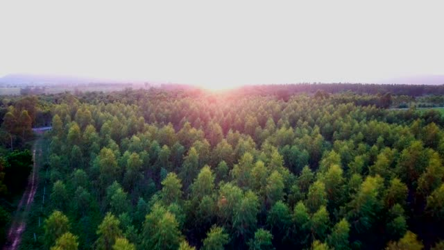 aerial forest in summer - tree hugging stock videos & royalty-free footage