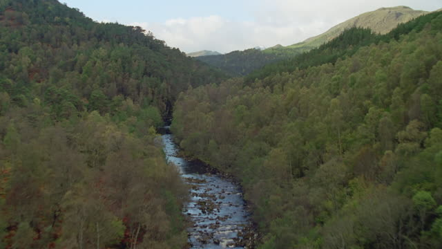 aerial forest, scotland - forest stock videos & royalty-free footage