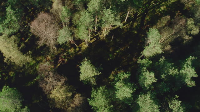 aerial forest, scotland - zoomeffekt bildbanksvideor och videomaterial från bakom kulisserna